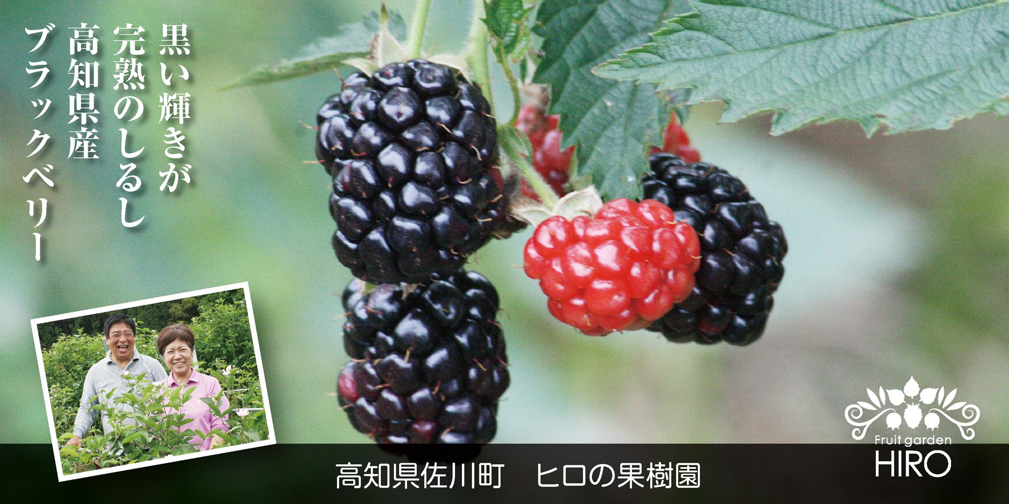 高知県佐川町 ヒロの果樹園