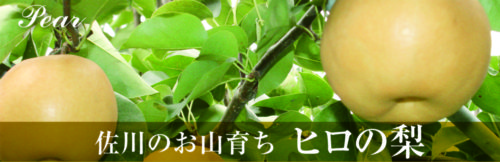 佐川のお山育ち ヒロの梨